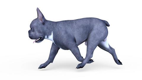 Dog Walk 0