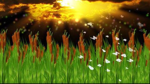 SUGAR CANE FIELD AT DUSK Animation