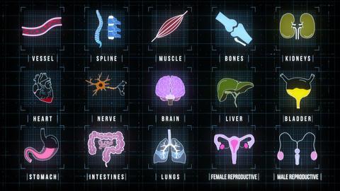 Human Internal Organs Icons Screen Animation