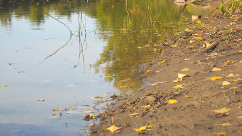 River Bank in early autumn, on the shore of a little yellow fallen leaves Footage