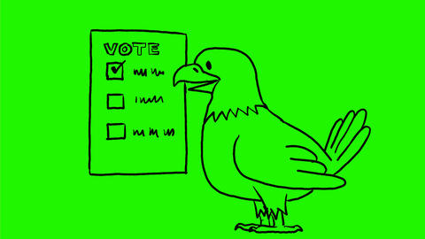 American Eagle Voting Drawing 2D Animation Animation
