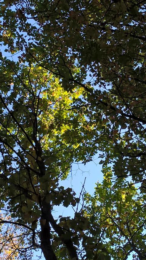 oak grove Fotografía