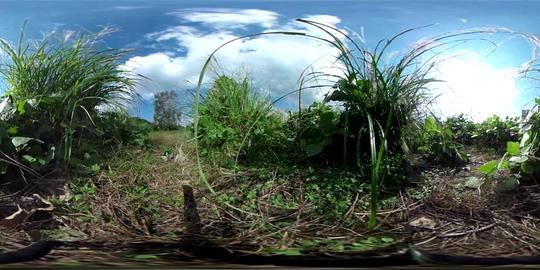 360°VRmaterial grassland 17sec VR 360° Video