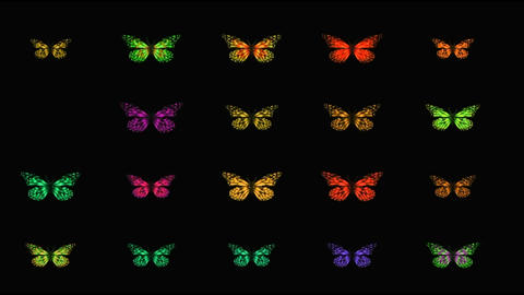 BUTTERFLY BUTTON SET Animation