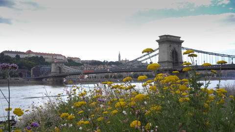 Chain bridge with flowers Footage