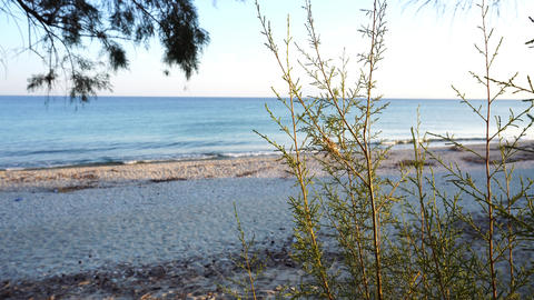 Sandy beach with pine tree in fourground Footage