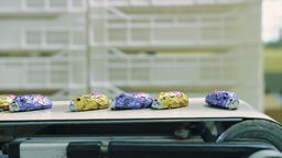 Candy factory. Wrapped candies lying on conveyor Live Action