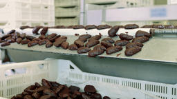 Chocolate candies lying on conveyor. Candy factory Live Action