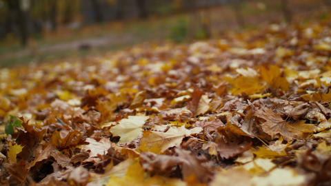 Colorful fallen autumn leaves on ground GIF