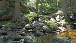 Magical, wild mountain forest with a pure water in a brook Footage