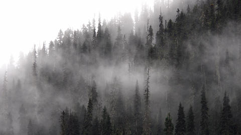 4k Cold scenery of fog and mist in forest Footage