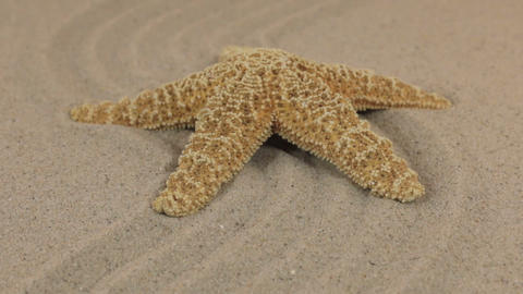 Approximation of a beautiful yellow starfish lying on a zigzag made of sand Footage