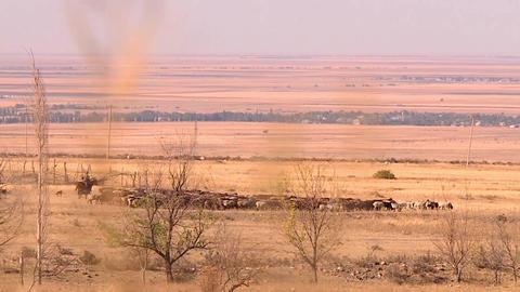 Steppe of Kazakhstan, a shepherd on a horse drives a herd of sheep ビデオ