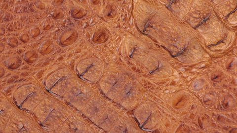 Rotation, close-up of the structure of natural crocodile skin Footage