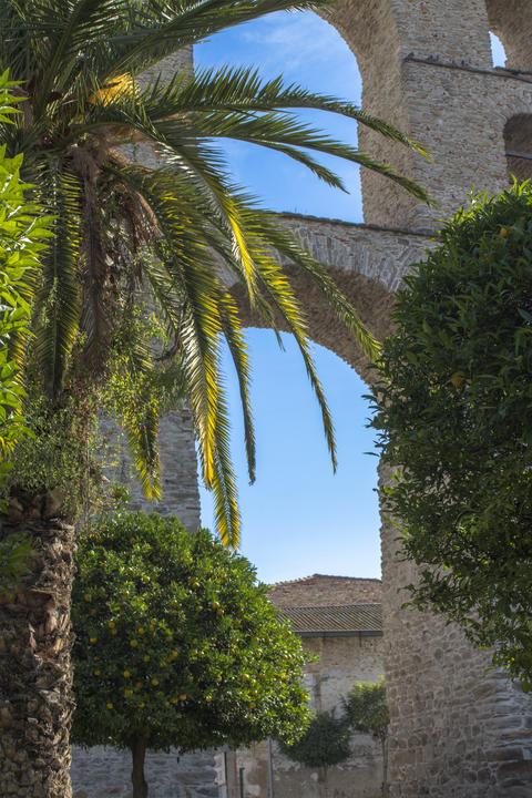 Palm trees and citrus trees in the background of a detail of Aqueduct - a Photo