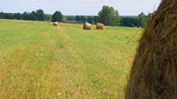 Round bales of straw on the green field at summer GIF