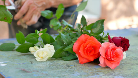 Florist woman making bouquet of pink, white and red roses for Flower Shop GIF