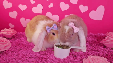 Cute Valentine's day animal pet rabbit concept. Animals pets valentines Live Action