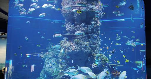 Tourism travel Aquarium in Sentosa Live影片