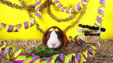 New year's eve party happy new year pet animal concept Live Action