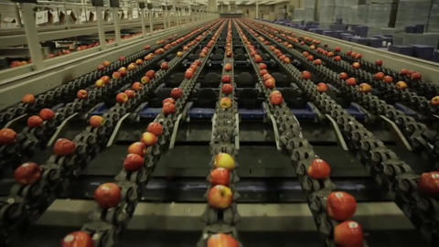 Equipment In A Factory For Drying And Sorting Apples. Industrial Production Footage