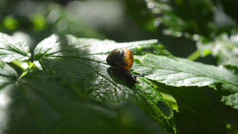 A small snail on a green leaf Archivo