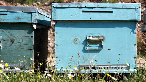 Hives and other beekeeping appliance for breeding bees and obtaining honey Live Action