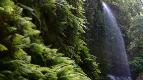 """Waterfall """"The Lindens"""",in Island of La Palma, Canary Islands, Spain Footage"""