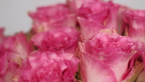 Pink rose bouquet. 4K resolution, close up dolly shot. Shallow depth of field Live Action