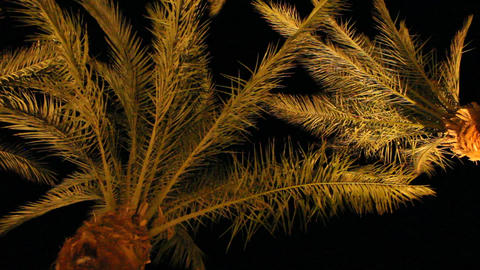 View to top of date palms from bottom at night. Date palm…, Live Action