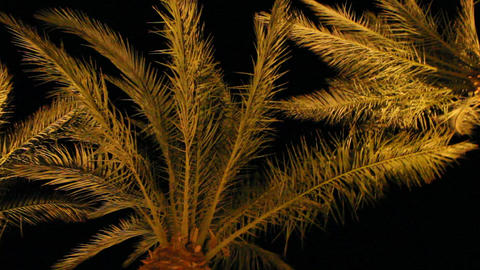 View to top of date palms from bottom at night. Date palm branches illuminated Footage