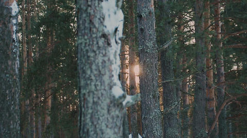 Winter forest view in the evening GIF
