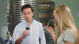 People degustating wine with sommelier Footage