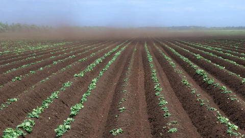 Black Blizzard ( dust devil. dust whirl) on agricultural lands Footage
