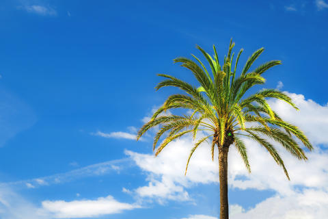 Bright green palmtree On a background of blue sky フォト