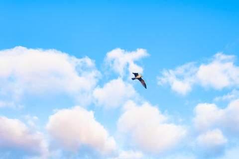 The bright blue sky with clouds and the bird Fotografía