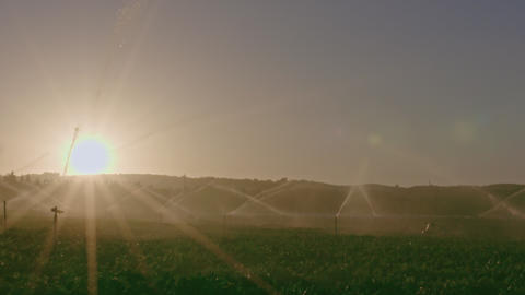 Slow motion of many impact sprinklers irrigating a field during sunset Footage