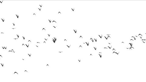 4k flock of pigeons birds fly over,migratory birds animal background Footage