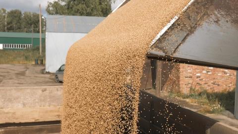 Transportation autumn harvest at industrial farm Live Action