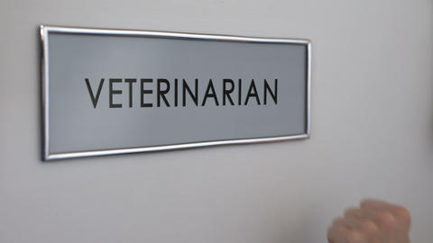 Veterinarian room door, hand knocking closeup, pets healthcare, animal injury Live Action