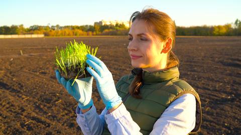Female farmer examines a sample of seedlings before planting it in the soil ビデオ