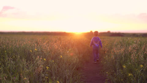 boy walking in a field during sunset Footage