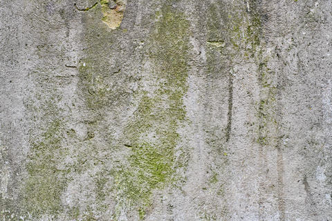 Old gray stone wall with green moss Fotografía