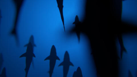 4K Shark Silhouettes Passing Overhead Footage