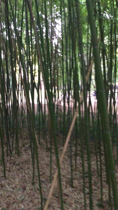 Bamboo Garden ビデオ
