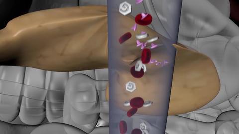 pancreas Footage