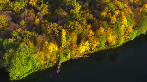 Aerial view of the lake and the bright autumn forest on its shore. Forest is Live Action