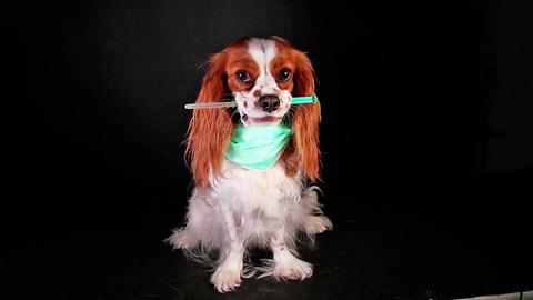 Pet vet dog doctor hospital vaccination sick sickness disease diseases flu Live Action