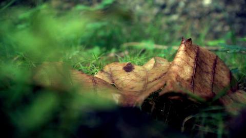 Soft leaf Footage