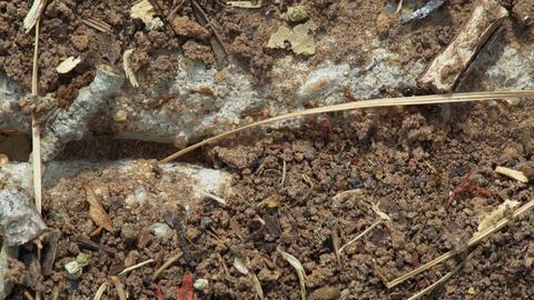ants marching through a path in an urban sidewalk Footage